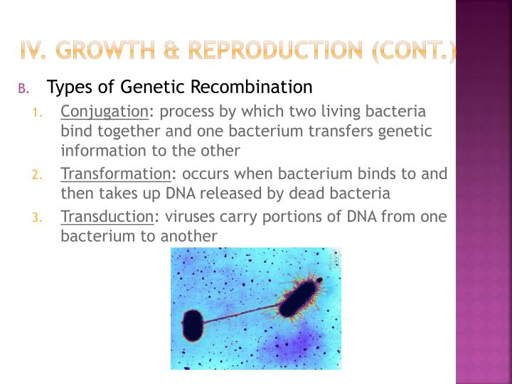 IV. Growth & Reproduction (cont.)