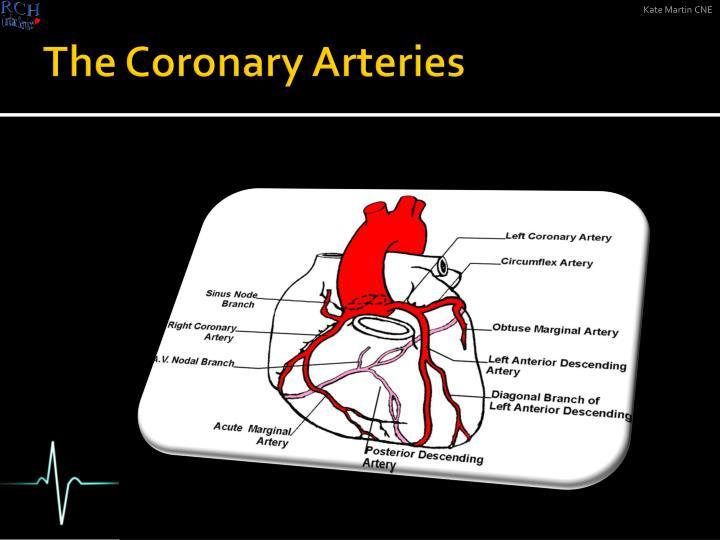 The Coronary Arteries