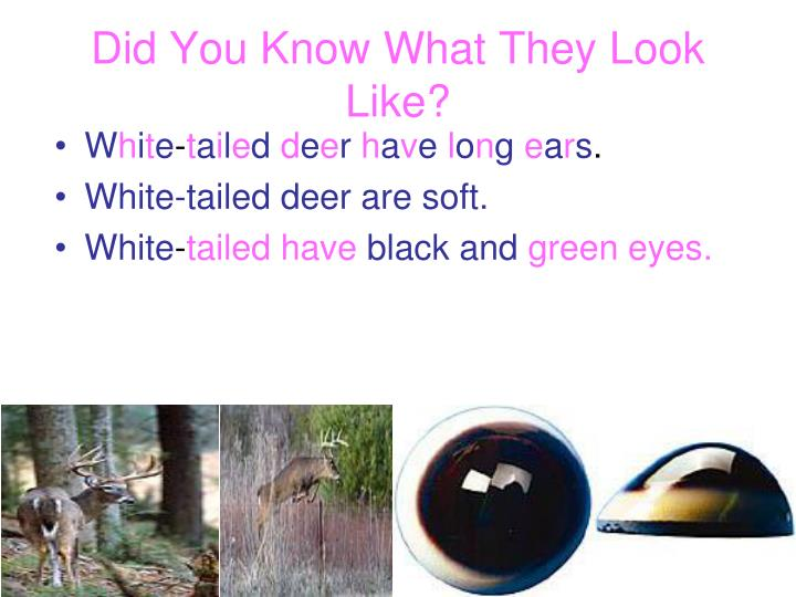 Did You Know What They Look Like?