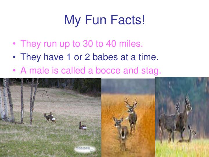 My Fun Facts!