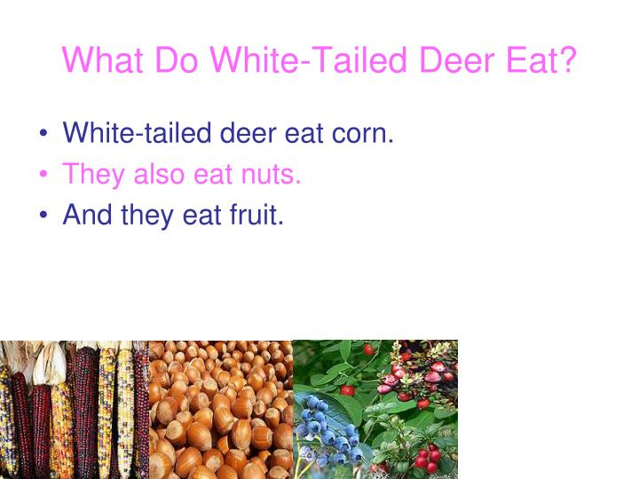 What Do White-Tailed Deer Eat?