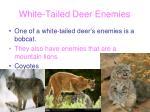 white tailed deer enemies