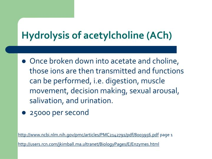 Hydrolysis of acetylcholine (ACh)