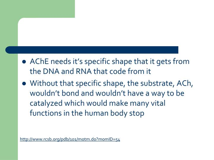 AChE needs it's specific shape that it gets from the DNA and RNA that code from it