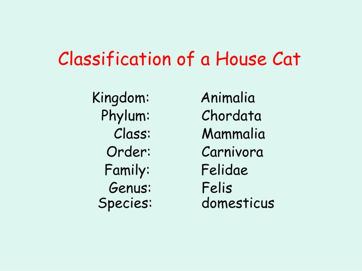 Classification of a House Cat