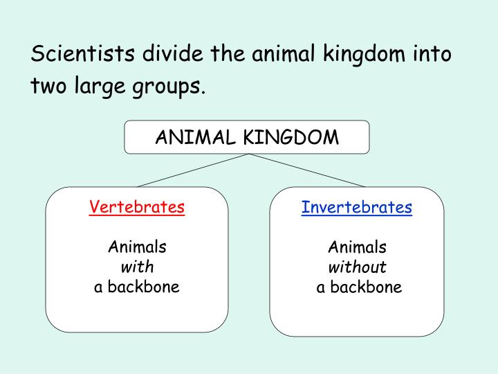 Scientists divide the animal kingdom into