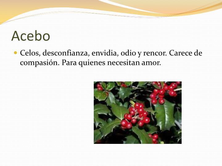 Acebo