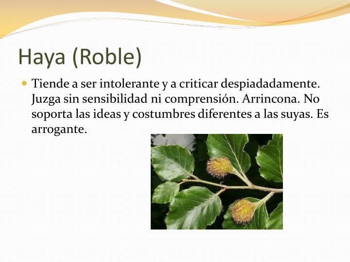 Haya (Roble)