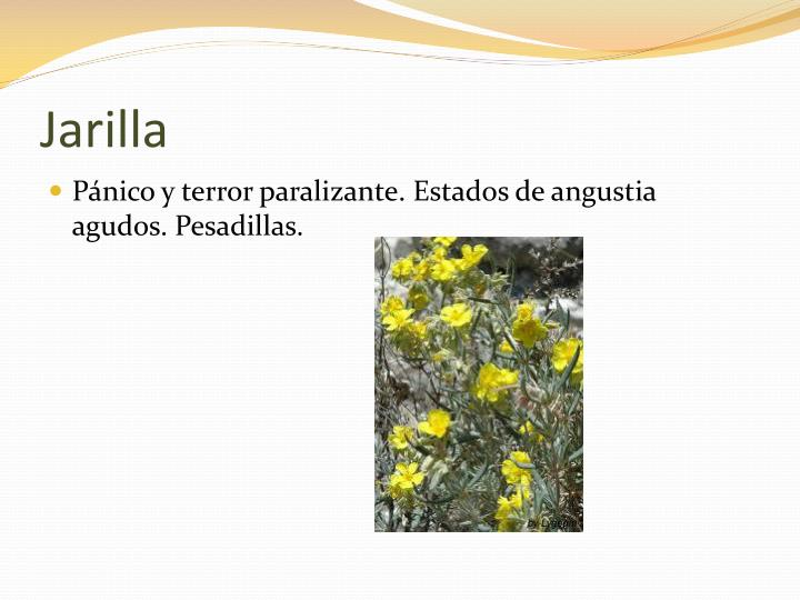 Jarilla
