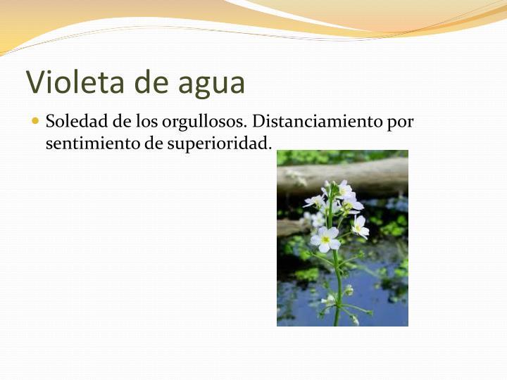 Violeta de agua