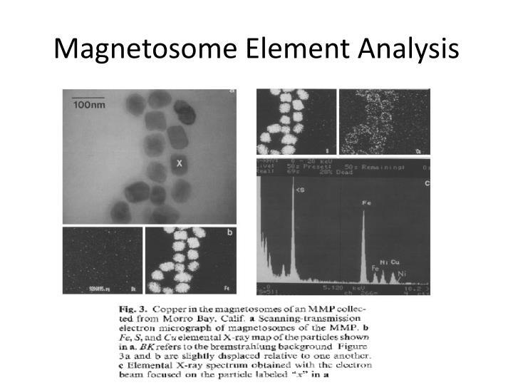 Magnetosome Element Analysis