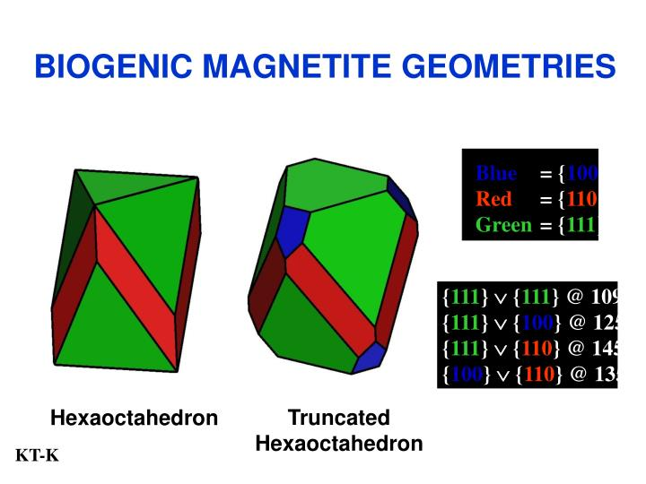 BIOGENIC MAGNETITE GEOMETRIES