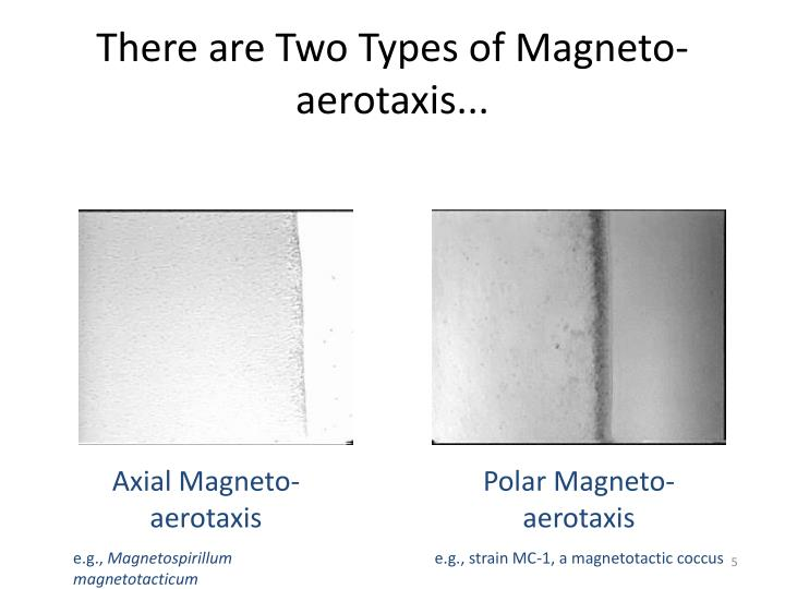 There are Two Types of Magneto-aerotaxis...