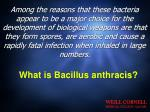 what is bacillus anthracis