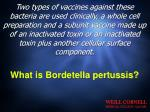what is bordetella pertussis