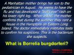 what is borrelia burgdorferi