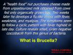 what is brucella