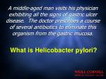 what is helicobacter pylori
