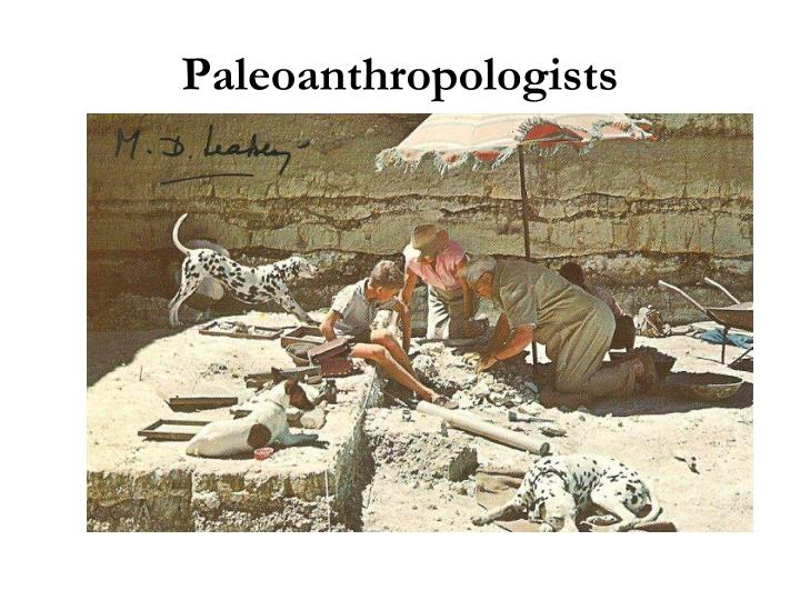 Paleoanthropologists