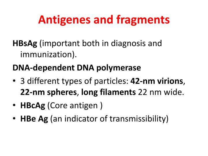Antigenes and fragments