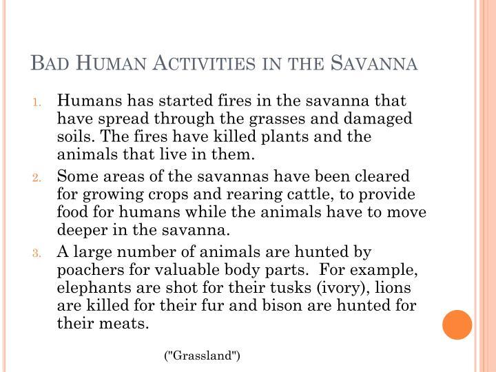 Bad Human Activities in the Savanna