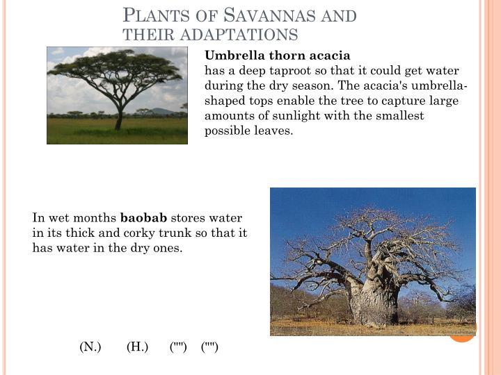 Plants of Savannas and their adaptations