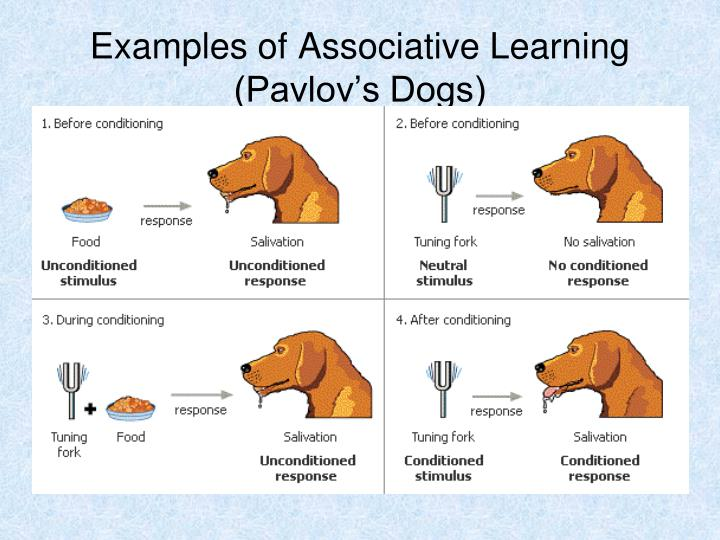 Examples of Associative Learning