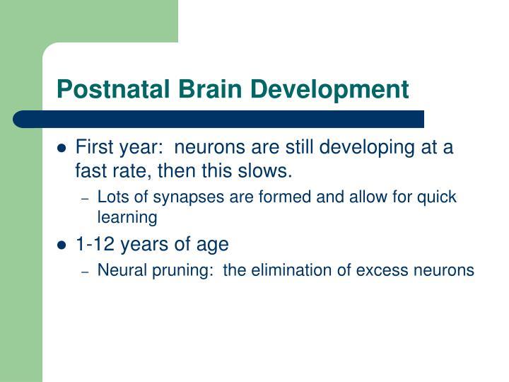 Postnatal Brain Development