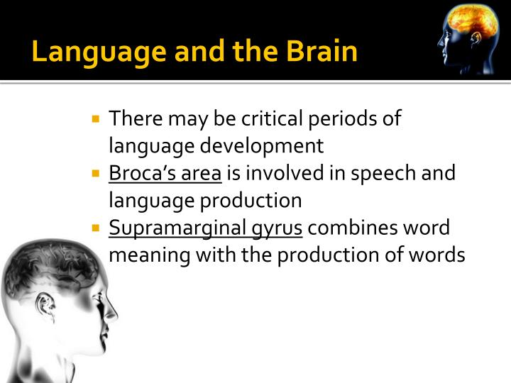 Language and the Brain