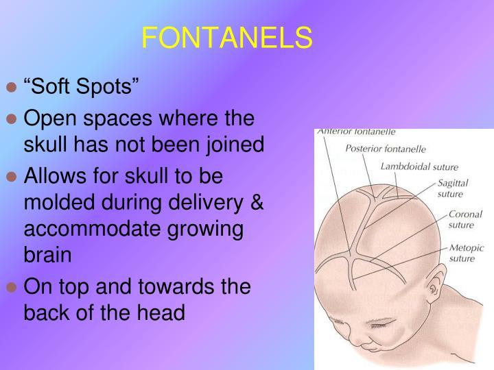 FONTANELS