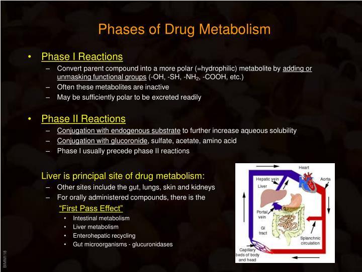 Phases of Drug Metabolism
