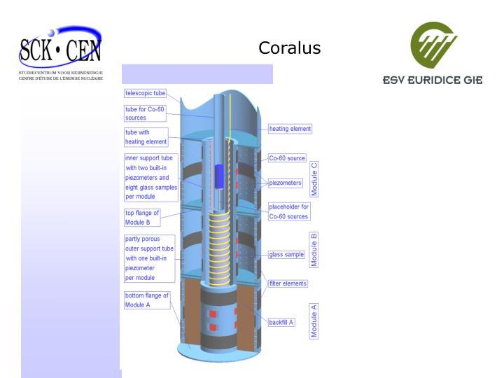 Coralus