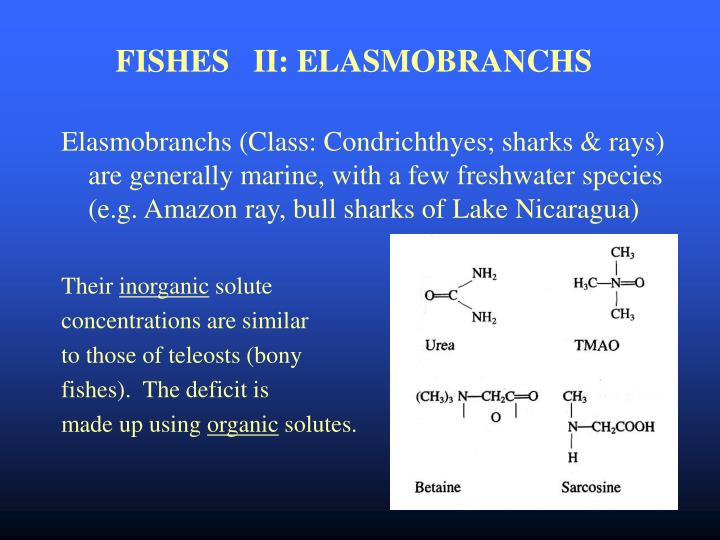 FISHES   II: ELASMOBRANCHS