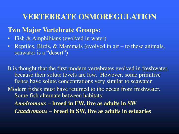 VERTEBRATE OSMOREGULATION