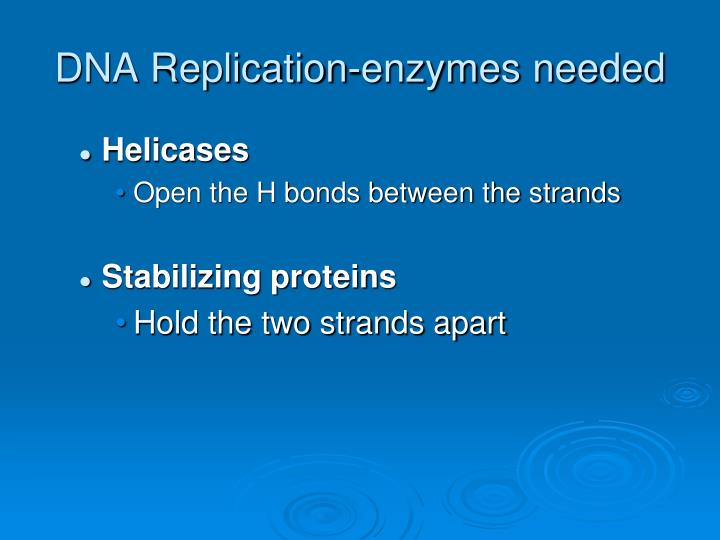 DNA Replication-enzymes needed
