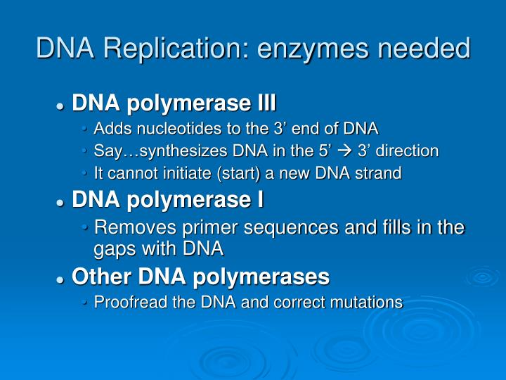 DNA Replication: enzymes needed