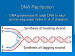 dna replication2