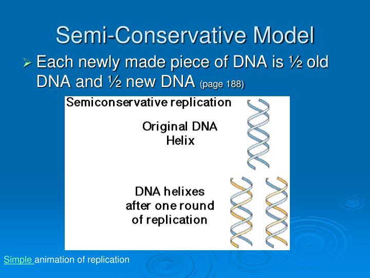 Semi-Conservative Model