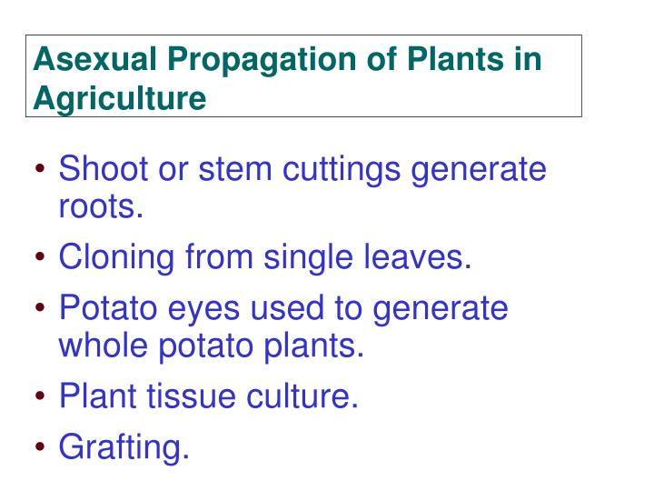 Shoot or stem cuttings generate roots.