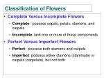 classification of flowers