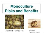 monoculture risks and benefits