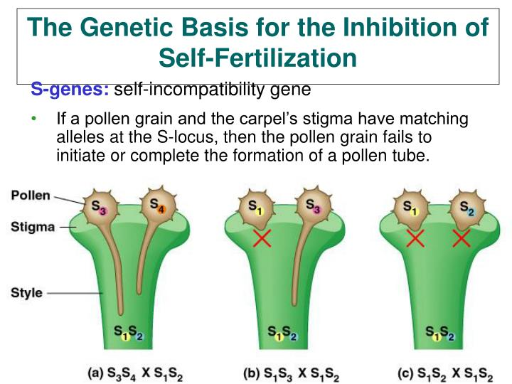 The Genetic Basis for the Inhibition of Self-Fertilization