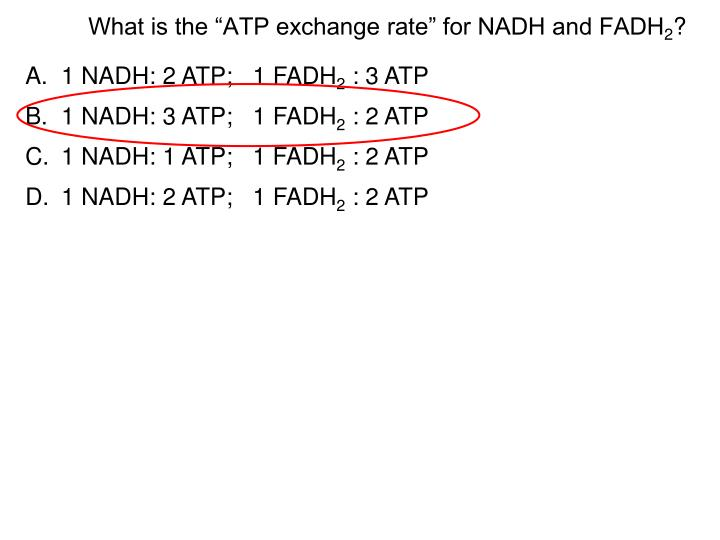 1 NADH: 2 ATP;   1 FADH