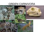 orden carnivora