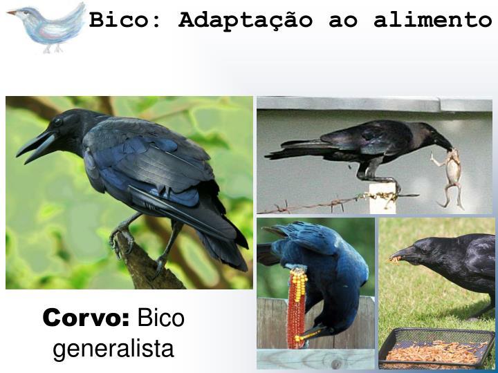 Bico: Adaptação ao alimento
