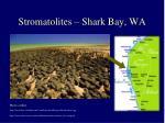 stromatolites shark bay wa