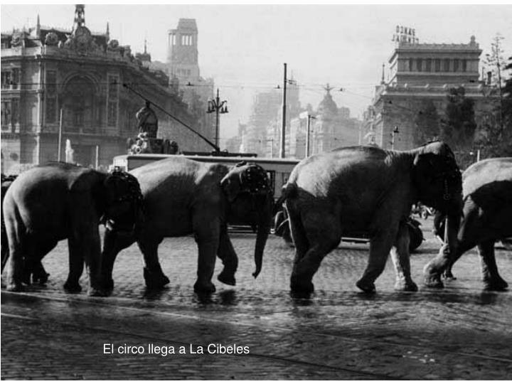 El circo llega a La Cibeles