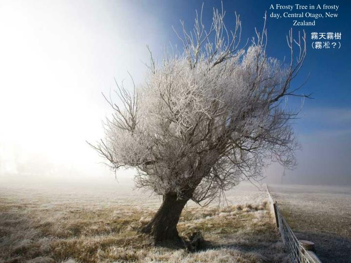 A Frosty Tree in A frosty day, Central Otago, New Zealand