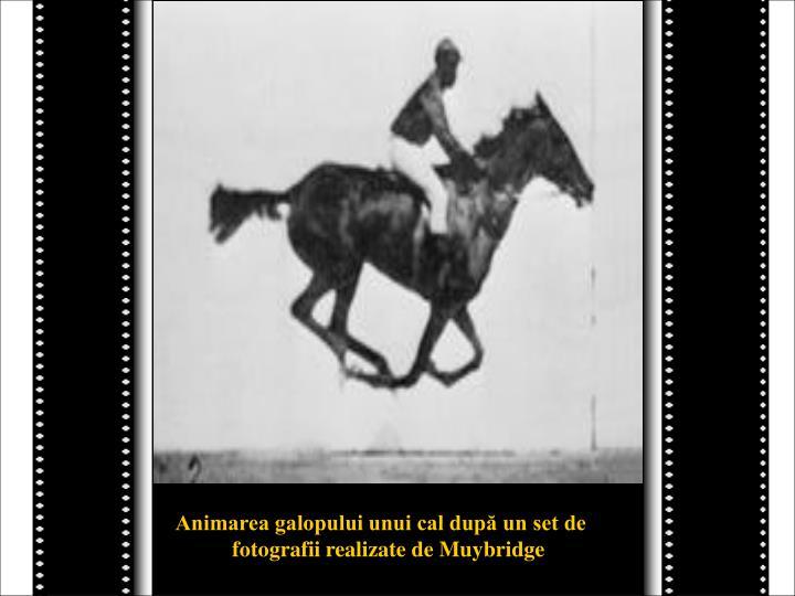 Animarea galopului unui cal după un set de