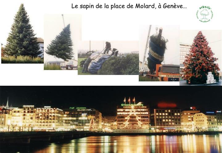 Le sapin de la place de Molard, à Genève…